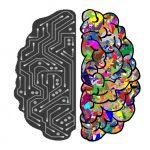 Связь между подвижным интеллектом и исполнительными функциями